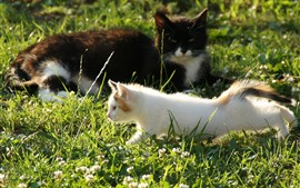 Preview wallpaper Two cats, grass, sunshine