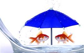 Dois peixes dourados, guarda-chuva azul, água, imagem criativa