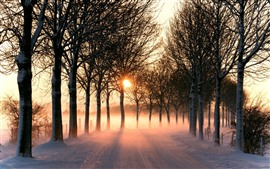 Preview wallpaper Winter, road, snow, trees, sun rays, morning, fog