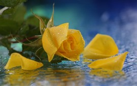 Preview wallpaper Yellow rose close-up, petals, water droplets