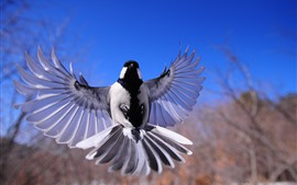 Preview wallpaper Bird flapping wings, flight