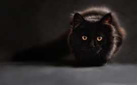 Preview wallpaper Black cat, rest, face, front view, yellow eyes