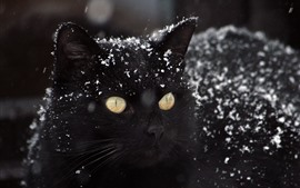 Preview wallpaper Black cat, snow, winter