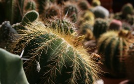 Preview wallpaper Cactus, houseplant, needles