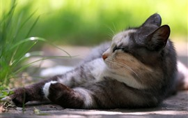 Preview wallpaper Cat sleeping, green grass, hazy
