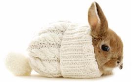 Милый кролик, шляпа, белый фон
