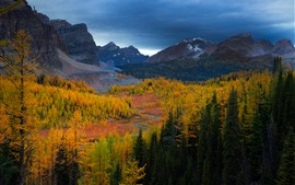 Bosque, árboles, montañas, otoño, anochecer, paisaje de la naturaleza