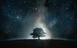 Árbol solitario, estrellado, noche, cielo