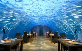 Preview wallpaper Maldives, cafe, underwater, fish