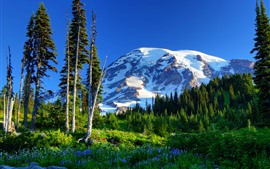 Preview wallpaper Mount Rainier, mountains, trees, green, snow, flowers, USA