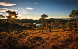 Norway, grass, trees, lake, sunshine, autumn