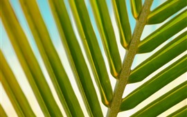 Palm leaf macro photography, green, stem
