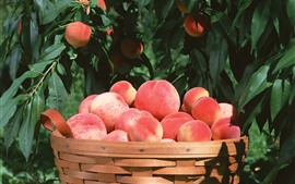Peaches, basket, green leaves, harvest
