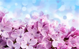 Preview wallpaper Pink lilac flowers close-up, petals, light circles