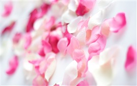 Preview wallpaper Pink rose petals, hazy, romantic