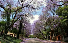 Preview wallpaper Road, trees, pink flowers bloom, spring