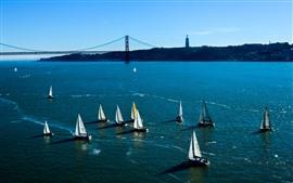 壁紙のプレビュー 帆船、青い海、橋、アメリカ