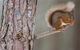 Preview wallpaper Squirrel, tree branch