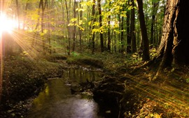Preview wallpaper Summer, trees, sun rays, creek, forest