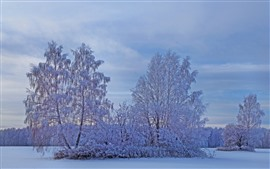 Preview wallpaper White snow, trees, winter, dusk