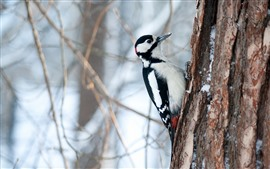 Preview wallpaper Woodpecker, tree, snow, winter