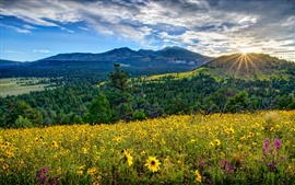 Preview wallpaper Arizona, valley, mountains, flowers, sunrise, USA