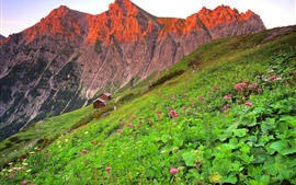 Austria, houses, mountains, slope, pink flowers