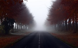 Preview wallpaper Autumn, trees, red leaves, road, fog, morning
