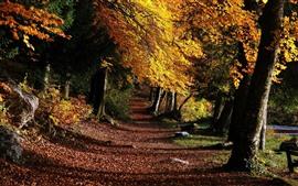 Outono, árvores, folhas amarelas, caminho, sombra