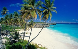 Preview wallpaper Beach, palm trees, sea, tropical scenery