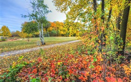Preview wallpaper Beautiful autumn scenery, trees, yellow and red leaves, path
