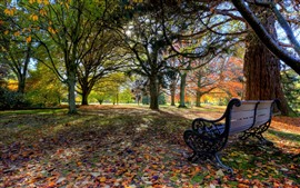 Preview wallpaper Bench, trees, autumn, park, sunshine, shadow