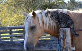 Preview wallpaper Best friends, cat and horse