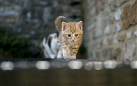 Preview wallpaper Cats walking, front view, bricks, wall