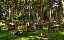 Cemetery, trees