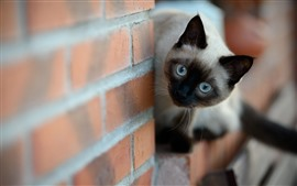 Preview wallpaper Cute cat look, wall, bricks