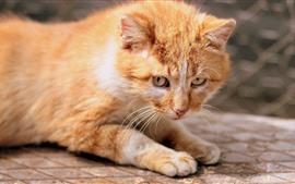 Lindo gatito, mirada, ojos, nebuloso