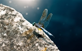 Preview wallpaper Dragonfly close-up, wings, stone, sunshine