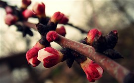 Preview wallpaper Flower buds, tree branch, spring