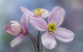 Preview wallpaper Four petals pink flowers, hazy