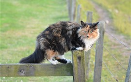 Preview wallpaper Furry cat, fence, look, hazy