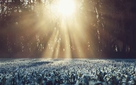 Preview wallpaper Grass, frost, trees, sun rays, winter
