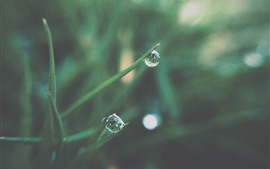Preview wallpaper Grass, water droplets, dew, morning
