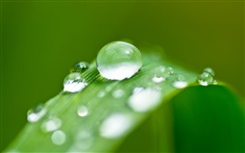 Preview wallpaper Green grass leaf, water droplets, dew