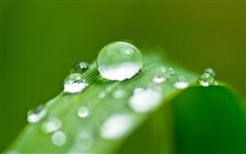 Hoja de hierba verde, gotas de agua, rocío