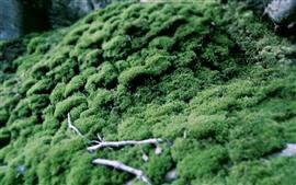 Green grass, moss, hazy