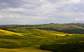 Italy, Montalcino, Tuscany, green fields, hills, trees, countryside