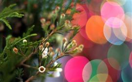 Pequeñas flores, círculos de luz de colores