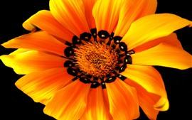 Оранжевый цветок макросъемка, лепестки, черный фон