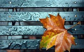 Preview wallpaper Orange maple leaf, water droplets, bench